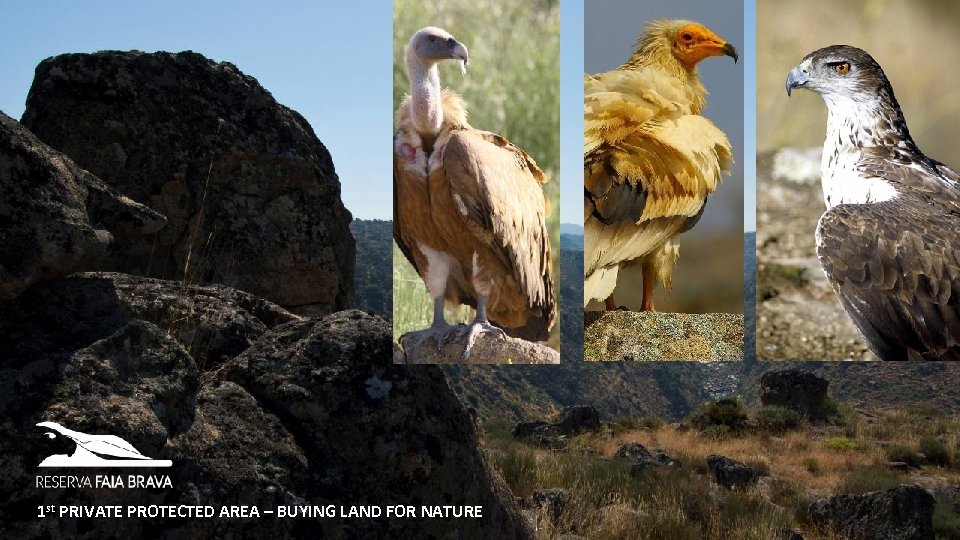 1 st PRIVATE PROTECTED AREA – BUYING LAND FOR NATURE