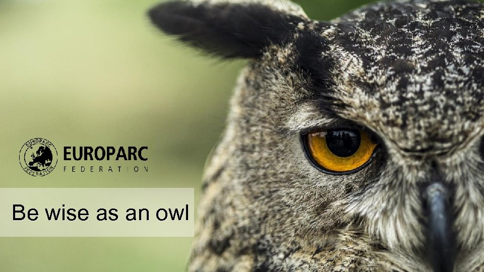 Be wise as an owl