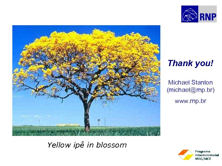 Thank you! Michael Stanton (michael@rnp. br) www. rnp. br Yellow ipê in blossom