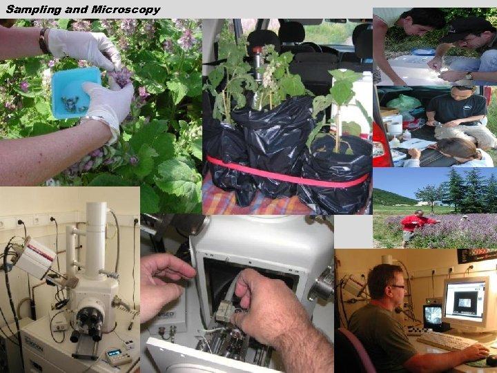 Sampling and Microscopy