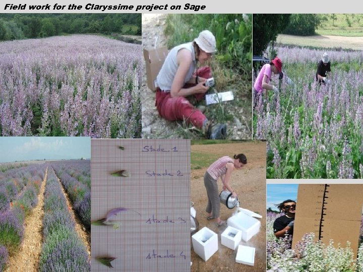 Field work for the Claryssime project on Sage