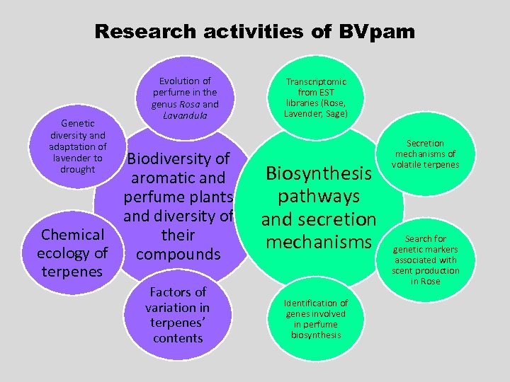 Research activities of BVpam Genetic diversity and adaptation of lavender to drought Evolution of