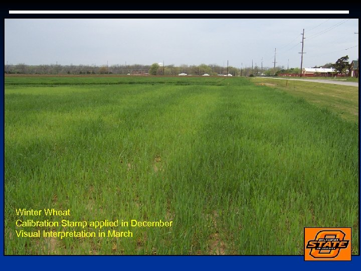 Winter Wheat Calibration Stamp applied in December Visual Interpretation in March