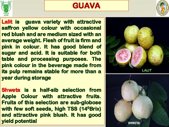 GUAVA Lalit is guava variety with attractive saffron yellow colour with occasional red blush
