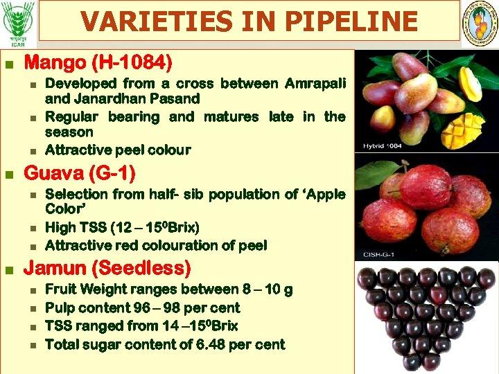 VARIETIES IN PIPELINE n Mango (H-1084) n n Guava (G-1) n n Developed from