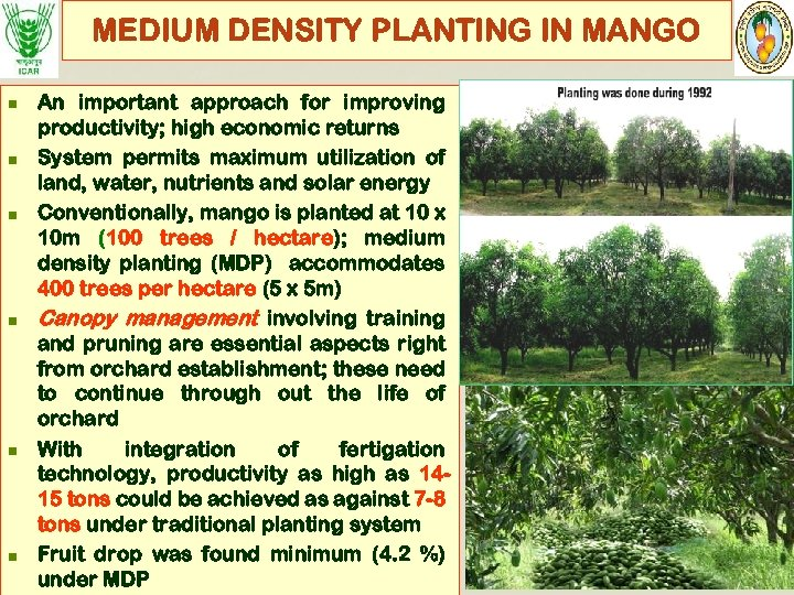 MEDIUM DENSITY PLANTING IN MANGO n n n An important approach for improving productivity;