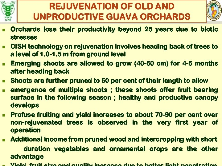 REJUVENATION OF OLD AND UNPRODUCTIVE GUAVA ORCHARDS n n n n Orchards lose their