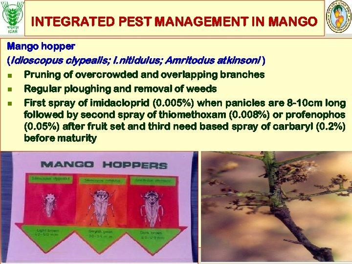 INTEGRATED PEST MANAGEMENT IN MANGO Mango hopper (Idioscopus clypealis; I. nitidulus; Amritodus atkinsoni )