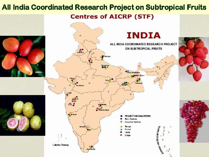 All India Coordinated Research Project on Subtropical Fruits