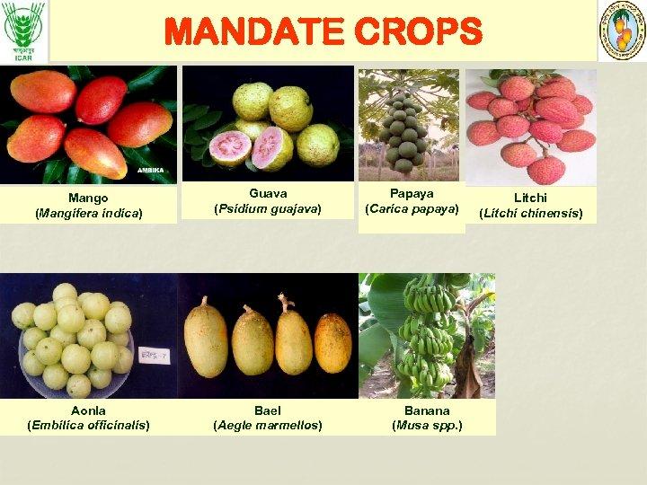 MANDATE CROPS Mango (Mangifera indica) Guava (Psidium guajava) Papaya (Carica papaya) Aonla (Embilica officinalis)