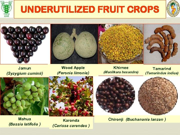 UNDERUTILIZED FRUIT CROPS Jamun (Syzygium cuminii) Mahua (Bassia latifolia ) Wood Apple (Feronia limonia)