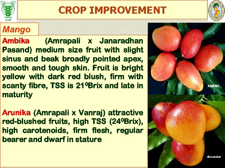 CROP IMPROVEMENT Mango Ambika (Amrapali x Janaradhan Pasand) medium size fruit with slight sinus
