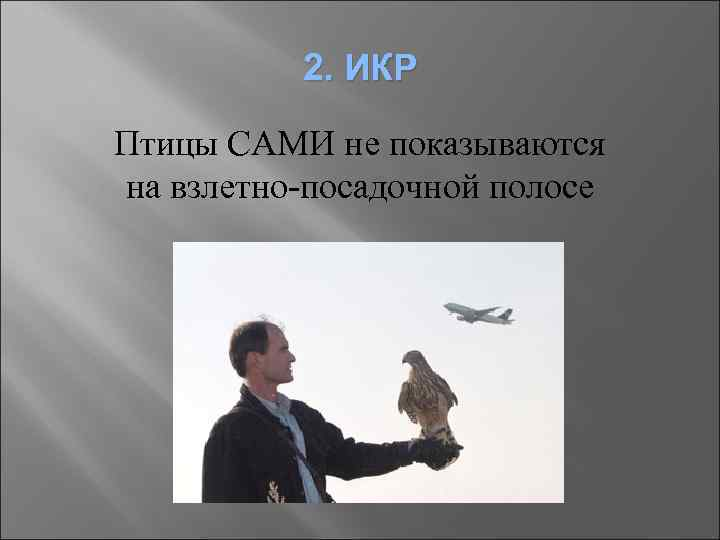 2. ИКР Птицы САМИ не показываются на взлетно-посадочной полосе