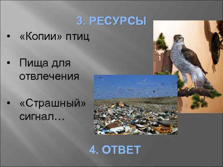 3. РЕСУРСЫ • «Копии» птиц • Пища для отвлечения • «Страшный» сигнал… 4. ОТВЕТ