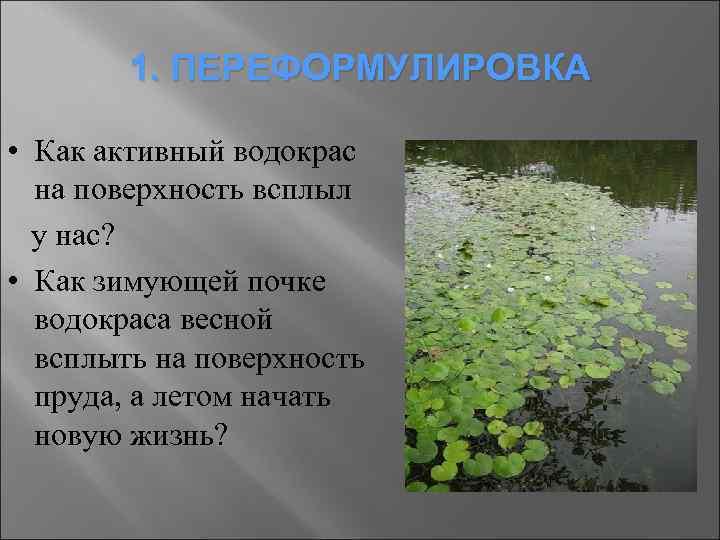 1. ПЕРЕФОРМУЛИРОВКА • Как активный водокрас на поверхность всплыл у нас? • Как зимующей