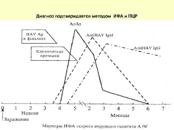 Диагноз подтверждается методом ИФА и ПЦР