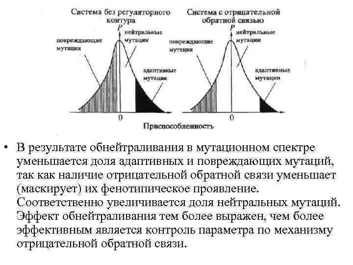 • В результате обнейтраливания в мутационном спектре уменьшается доля адаптивных и повреждающих мутаций,