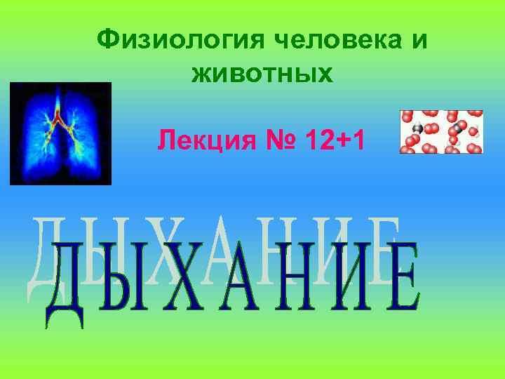 Физиология человека и животных Лекция № 12+1