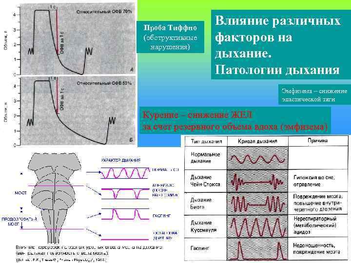 Проба Тиффно (обструктивные нарушения) Влияние различных факторов на дыхание. Патологии дыхания Эмфизема – снижение