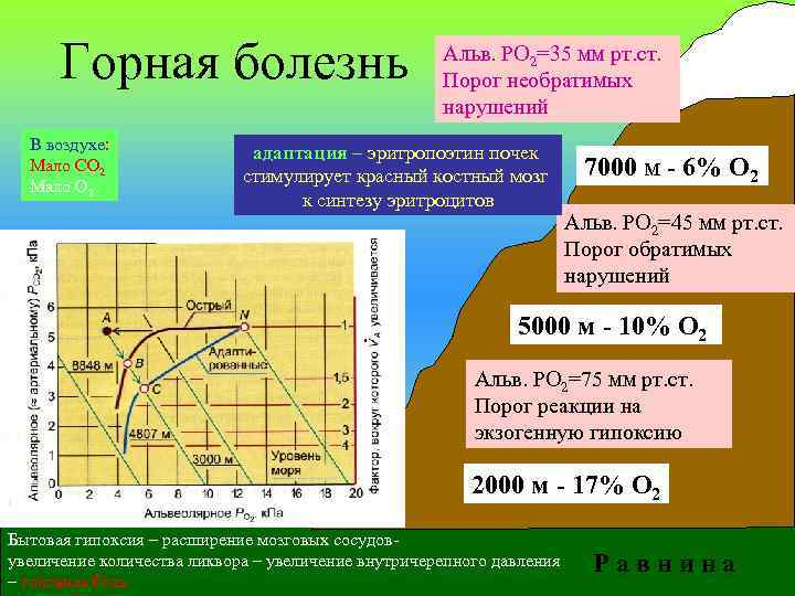 Горная болезнь В воздухе: Мало СО 2 Мало О 2 Альв. РО 2=35 мм