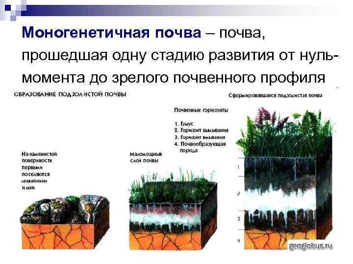 Моногенетичная почва – почва, прошедшая одну стадию развития от нульмомента до зрелого почвенного профиля