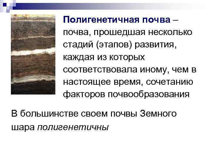 Полигенетичная почва – почва, прошедшая несколько стадий (этапов) развития, каждая из которых соответствовала иному,