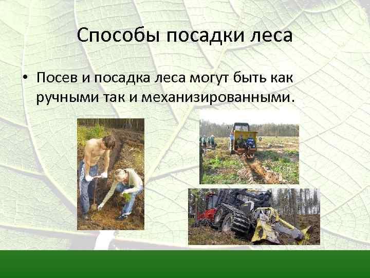 Методы выращивания леса