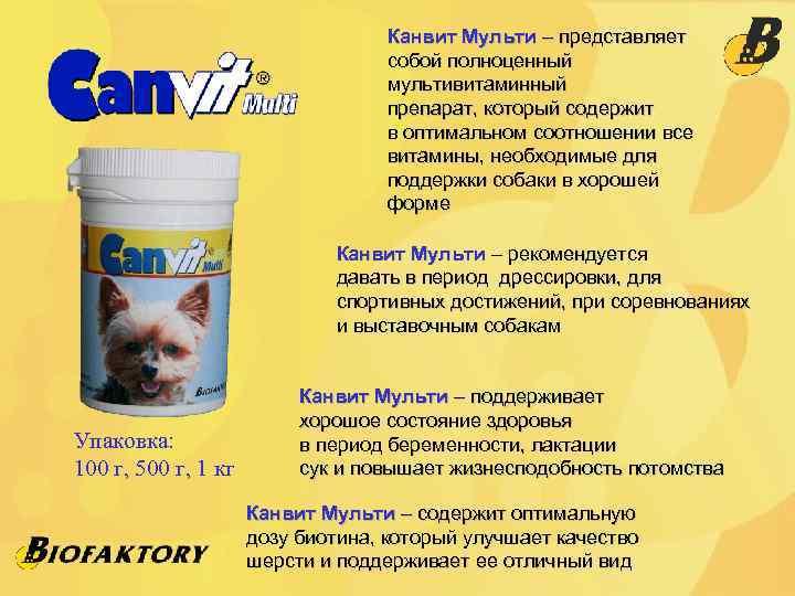 Ветеринарная диета для кошек Роял Канин: полный обзор