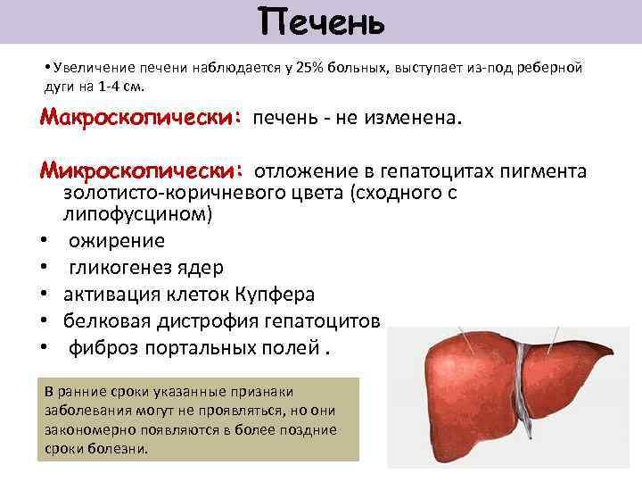 Увеличенная Печень И Диета. Диета при гепатомегалии печени – нормы правильного питания