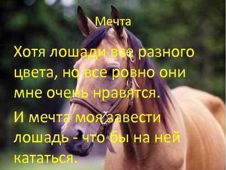 лошади стихи короткие цвет мебели