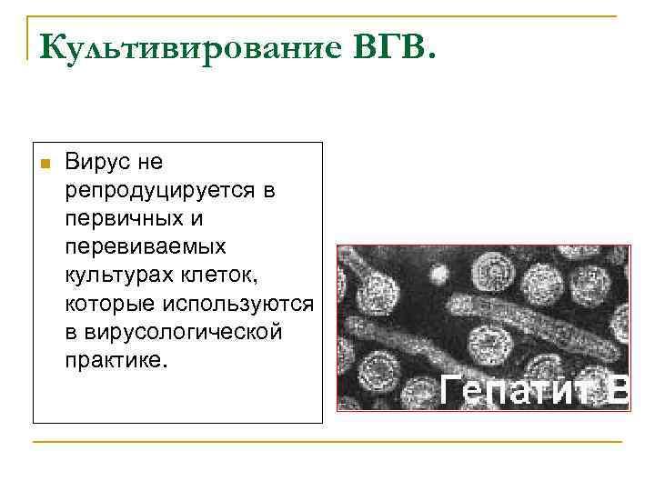 Культивирование ВГВ. n Вирус не репродуцируется в первичных и перевиваемых культурах клеток, которые используются