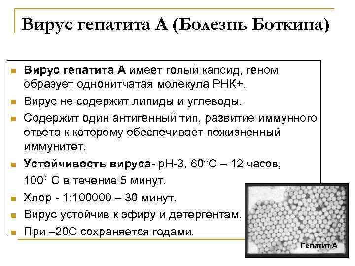 Вирус гепатита А (Болезнь Боткина) n n n n Вирус гепатита А имеет голый