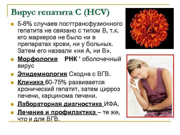 Вирус гепатита С (HCV) n n n 5 -8% случаев посттрансфузионного гепатита не связано