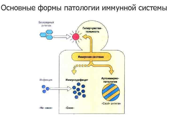 Основные формы патологии иммунной системы