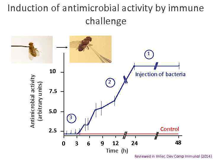 Induction of antimicrobial activity by immune challenge Antimicrobial activity (arbitrary units) 1 10 Injection
