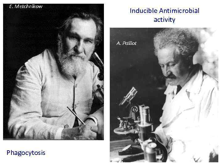E. Metchnikow Inducible Antimicrobial activity A. Paillot Phagocytosis
