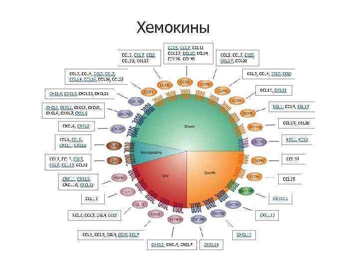 Хемокины