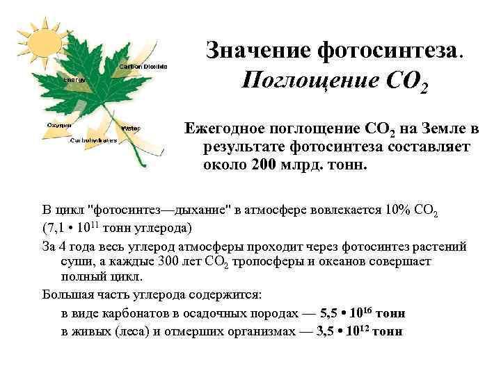 уникальная зона, значение фотосинтеза для эволюции жизни на земле очень простой рецепт