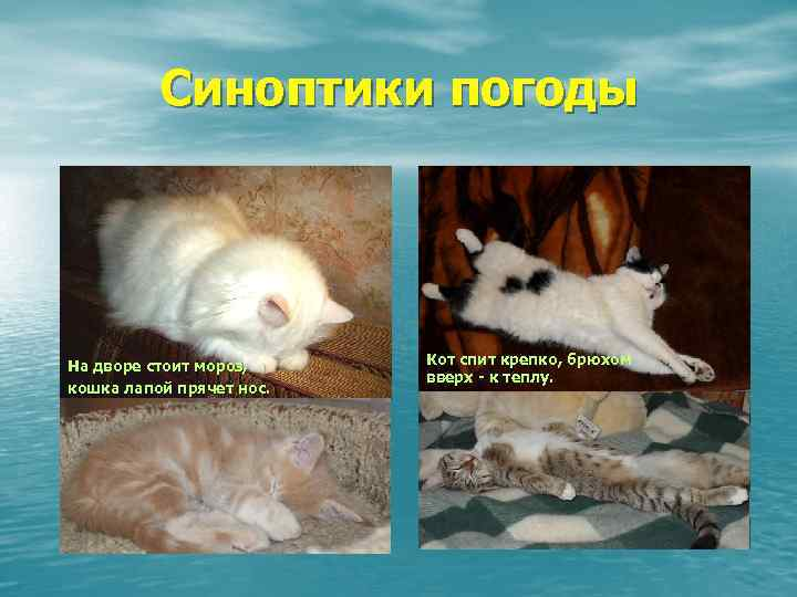 Картинки выздоравливай скорее котик