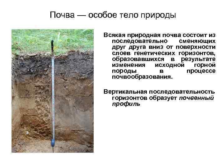 Почва — особое тело природы Всякая природная почва состоит из последовательно сменяющих друга вниз