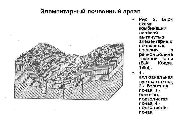 Элементарный почвенный ареал • • Рис. 2. Блоксхема комбинации линейновытянутых элементарных почвенных ареалов в