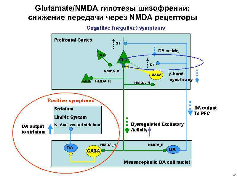 The glutamate hypothesis and the glutamate linked