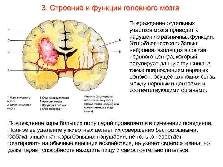 Секс ресурсы головного мозга