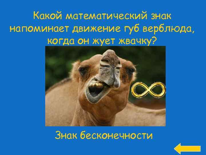 Какой математический знак напоминает движение губ верблюда, когда он жует жвачку? Знак бесконечности