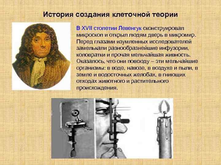 История создания клеточной теории В XVII столетии Левенгук сконструировал микроскоп и открыл людям дверь