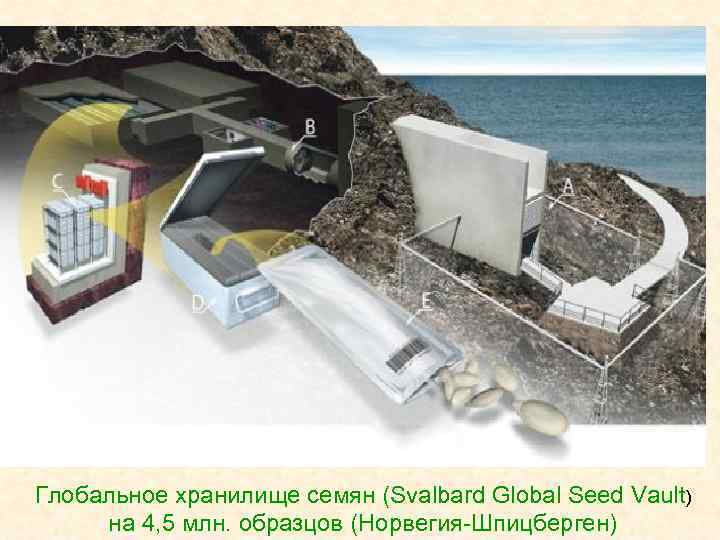 Глобальное хранилище семян (Svalbard Global Seed Vault) на 4, 5 млн. образцов (Норвегия-Шпицберген)