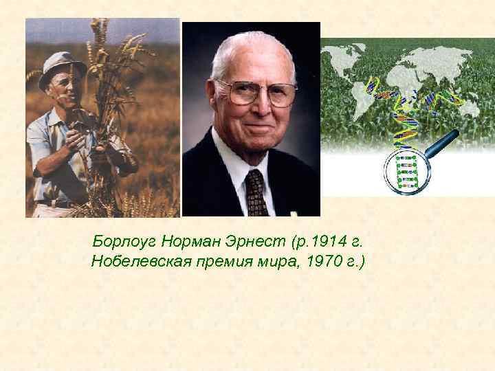 Борлоуг Норман Эрнест (р. 1914 г. Нобелевская премия мира, 1970 г. )