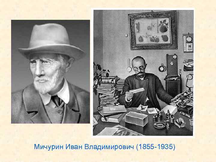 Мичурин Иван Владимирович (1855 -1935)