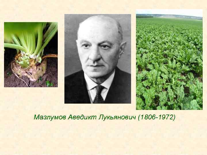 Мазлумов Аведикт Лукьянович (1806 -1972)