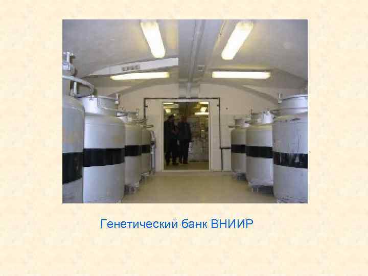 Генетический банк ВНИИР